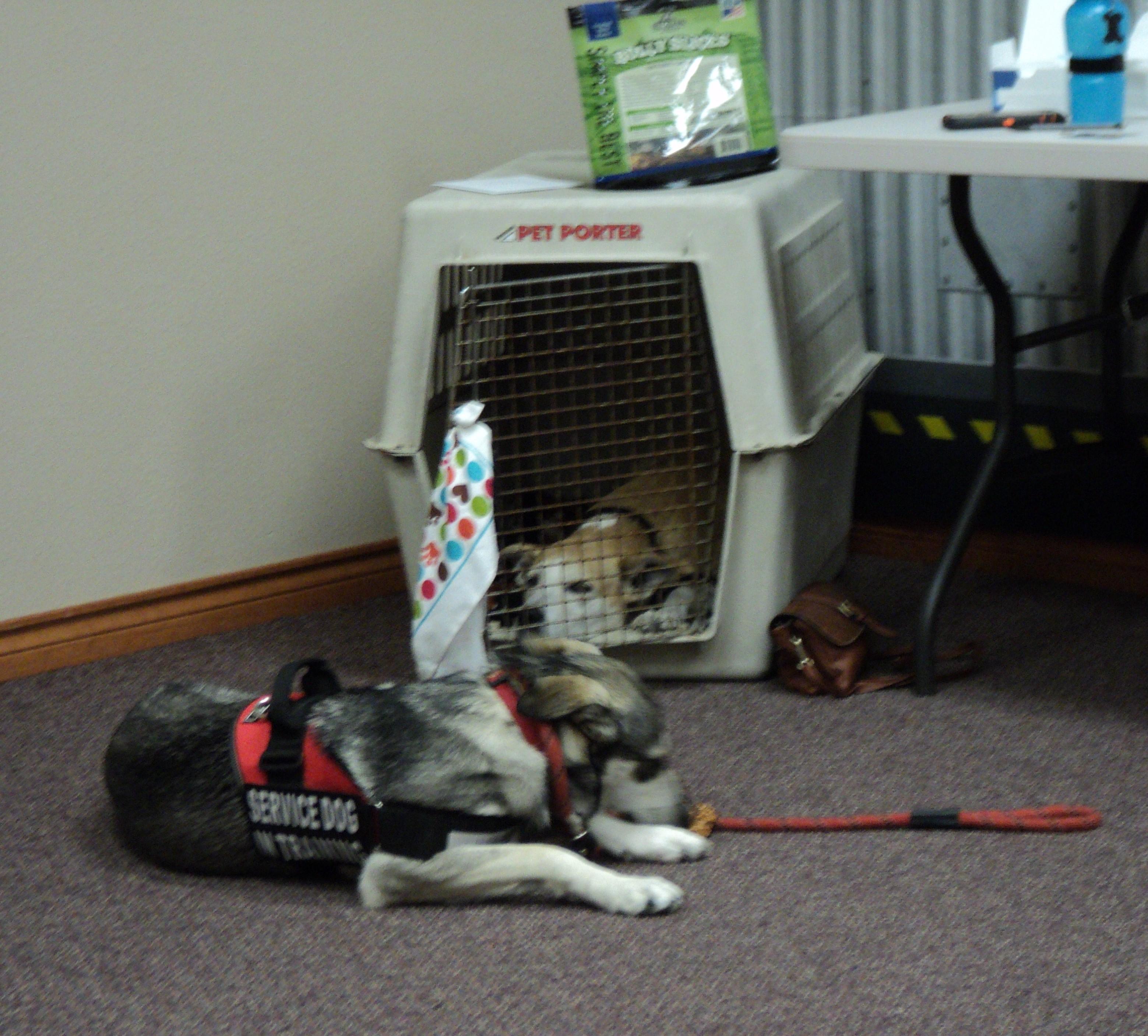 RC 6-13-17, Sleepy therapy dogs, Chili & Crush .jpg